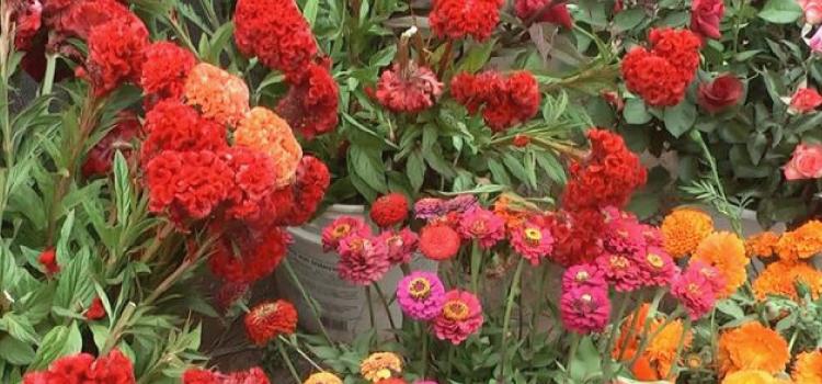 Flores de Maimará, colores de un pueblo