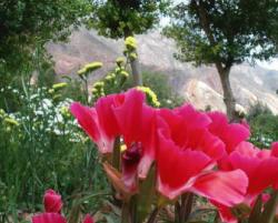 Flores de la Quebrada de Humahuaca