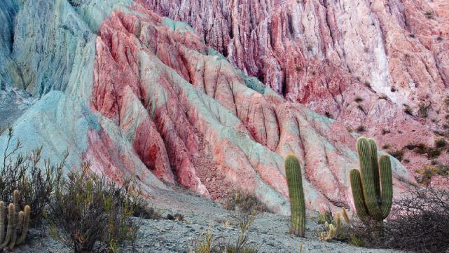 Cardones cerca del Cerro de los siete colores en Purmamarca - Quebrada de Humahuaca, Jujuy, Argentina
