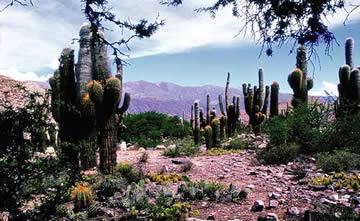 Pucará de Juella en la Quebrada de Humahuaca, provincia de Jujuy, Argentina