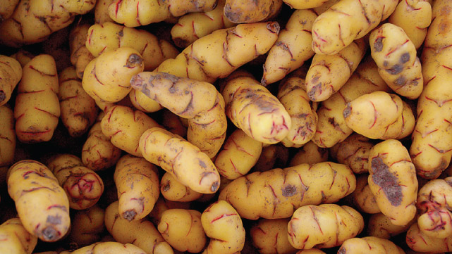 Types of Potatoes of the Quebrada de Humahuaca, Jujuy, Argintina